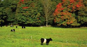 mainstone farm