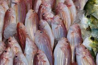 fisheryByChina