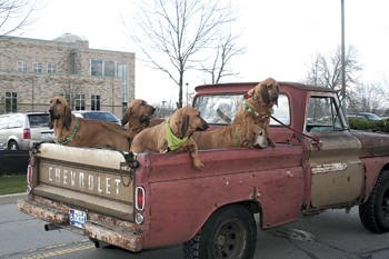 We're not in Beverly Hills anymore! We are in Fort Wayne, Indiana! In the World's Shortest Parade near Deer Park on St. Patrick's Day!