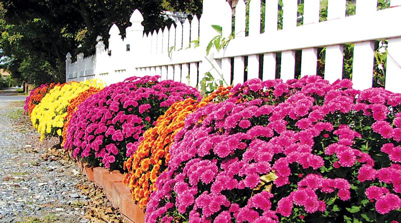 Fall Flower Gardening Tips Green Thumb Gardener The