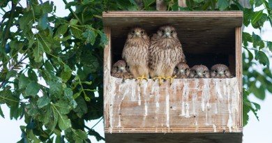 BIRD NESTS – Life In The Outdoors