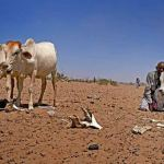 Crisis Narratives and the Ongoing Drought in Ethiopia