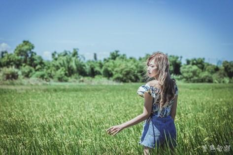 忠義站稻田