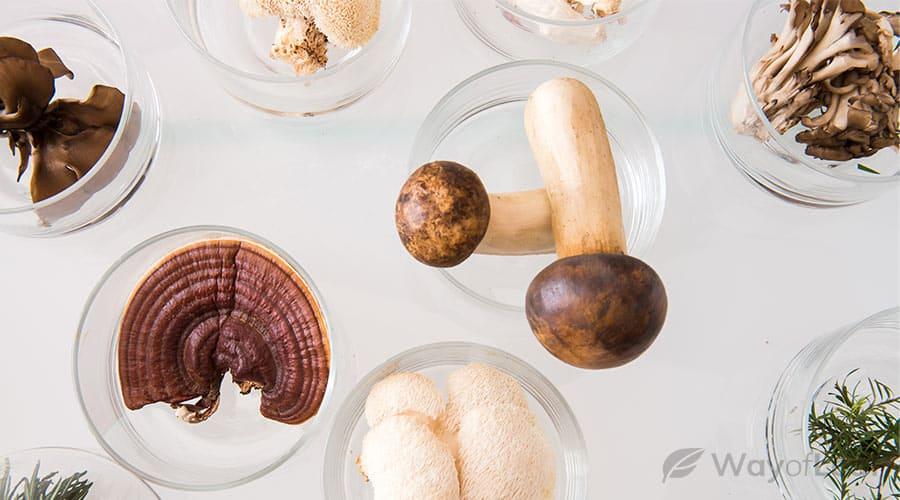 medicinal-mushrooms-an-overview