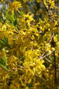 Wayome upcycling bonne année 2017 jaune
