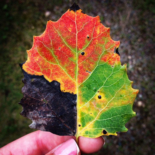 Hd Wallpaper Fall Leaf Change Picture Of The Day The Four Seasons Leaf