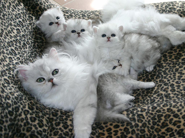 Cat Mom With their Kittens (20 Photos)