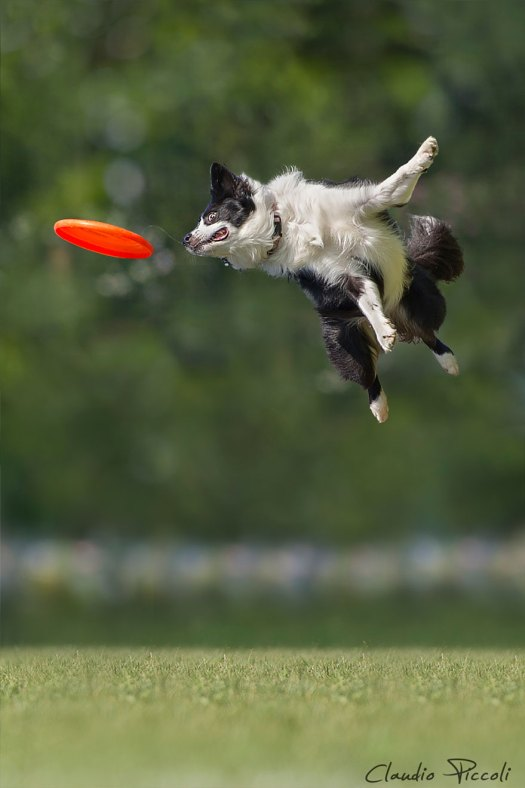 dogs-can-fly 7jpg
