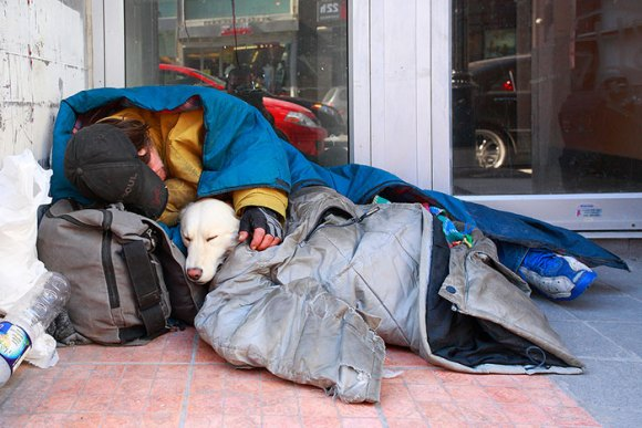 homeless-dogs-14