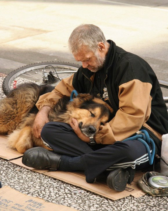 homeless-dogs-7