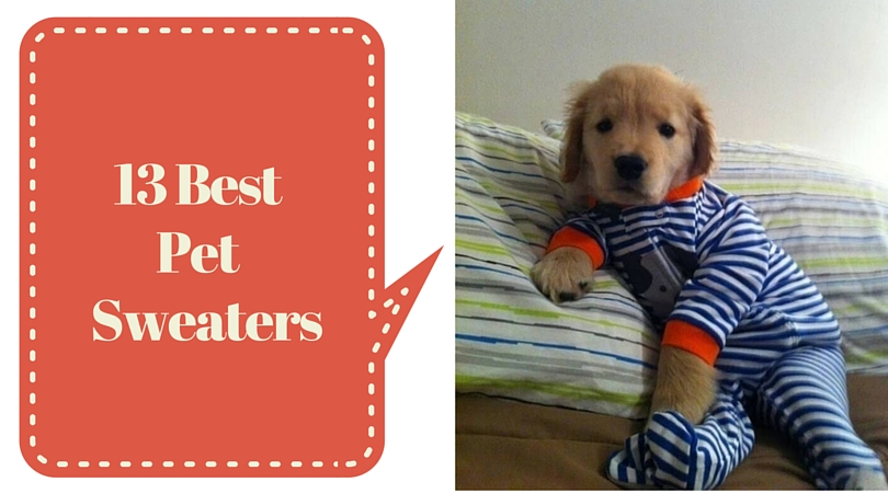 When a Pet Wears Sweaters they look Absolutely Stunning (13 Photos)