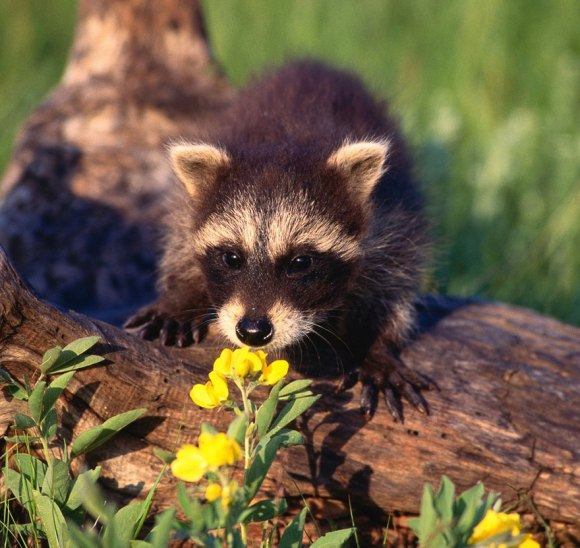 animals-smelling-flowers-25