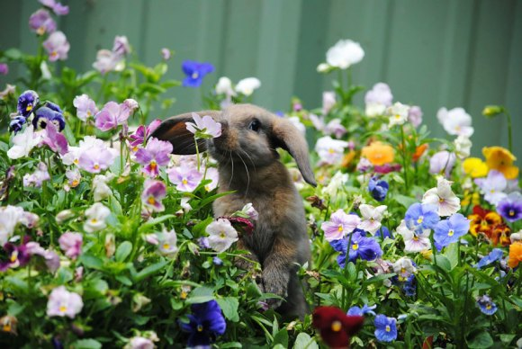 animals-smelling-flowers-5