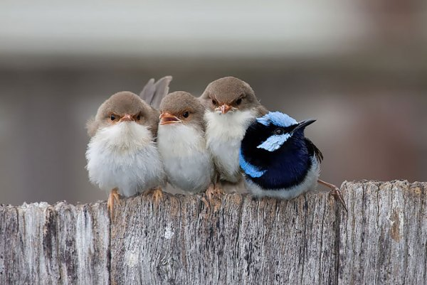 cute-bird-parents-13