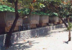 Munting Buhangin Beach Camp Nasugbu Batangas Pictures