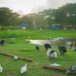 Davao Crocodile Park (7)
