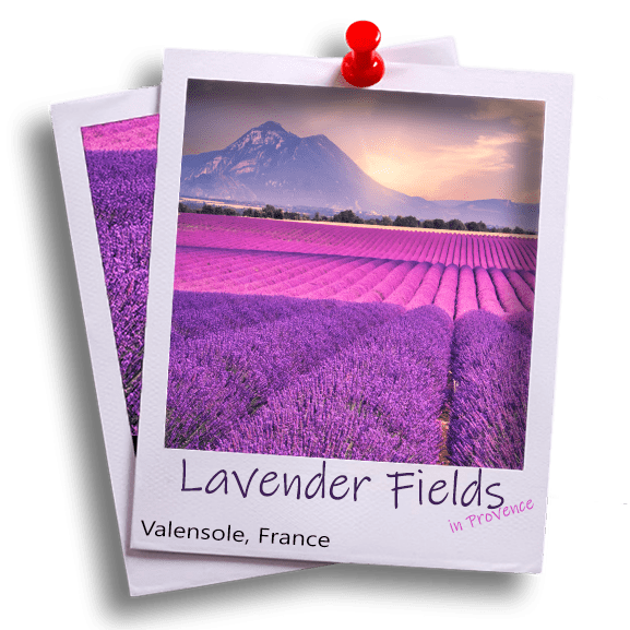 LavenderFieldsEmotionShots