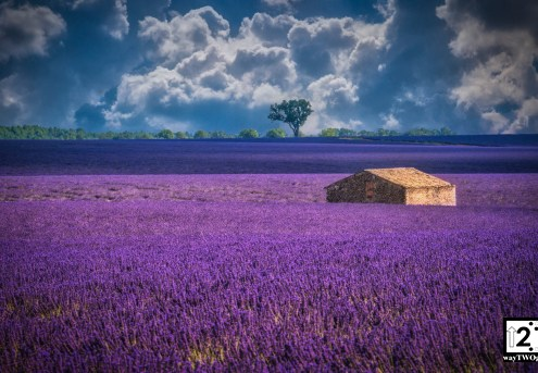 Valensole3lowres