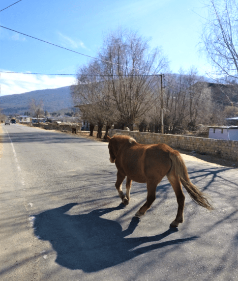 A horse gallops on the streets of Paro, Bhutan