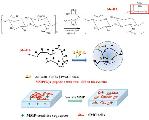 small resolution of figure 1 schematic illustration of fabrication of ha derivatives formation of hydrogel and cell migration of smcs in 3d matrix