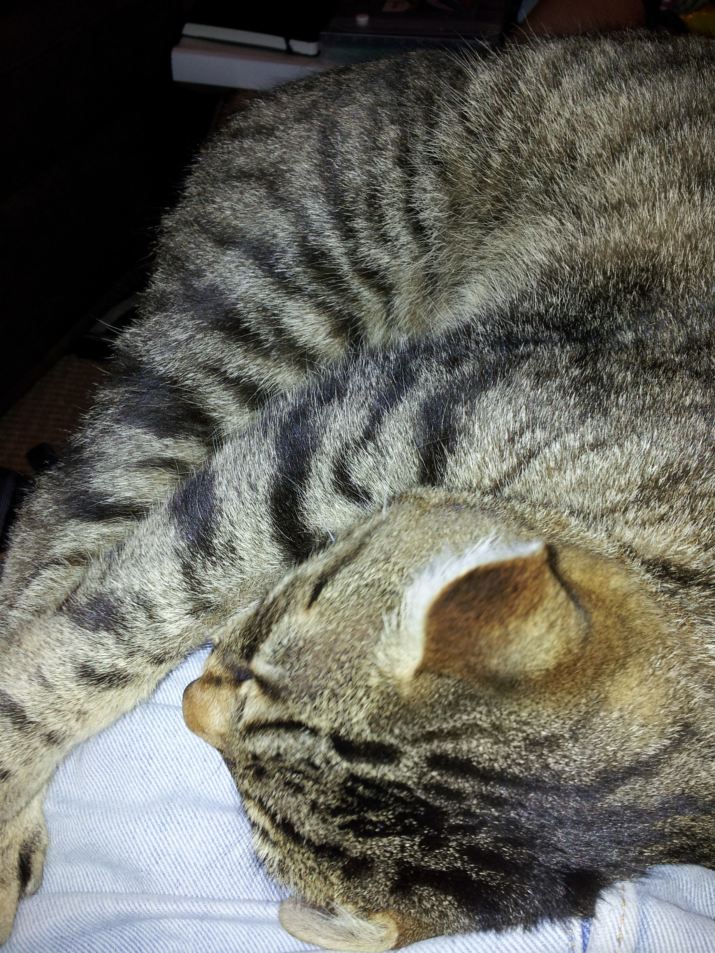 best sofa for cats owners twin bed cushions how to keep off your wb furniture