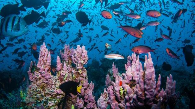 Major Threats To Our Ecosystem Environment Protection