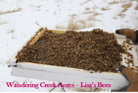 Lots and lots of dead bees
