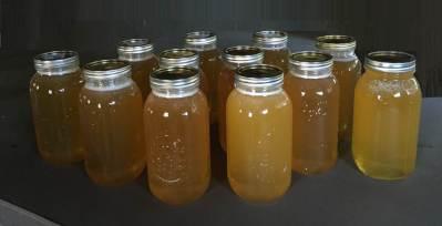 Honey - 6 gallons