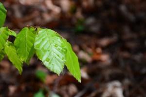 leaf-339124_1280