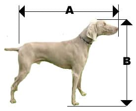 picture-of-dog-measurement