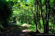 Funil - Rio Preto, MG: Mata do Cambuí