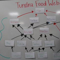 Arctic Fox Food Chain Diagram 7 Pines Resort Web Of The Tundra |