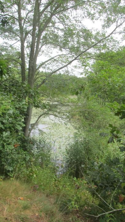FB pond from bike trail