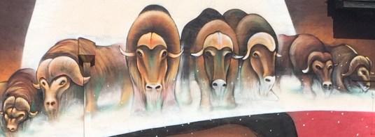 mending-musk-ox