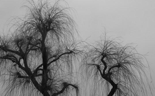 01_Andrew Robinson_Tree Fountains