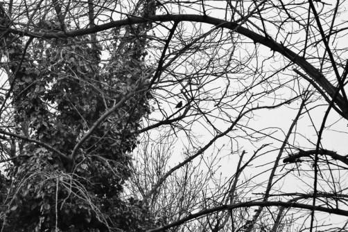 03_Andrew Robinson_Bird
