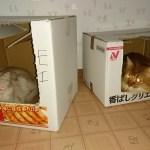 【ネコとの暮らし】秋がなかった今年。猫も寒いにゃ~ソマリ達のアイデア。