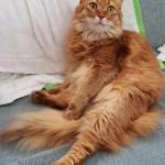 【ネコとの暮らし】我が家のソマリ~'s、そら6歳誕生日♪長男への変化とプレゼント。