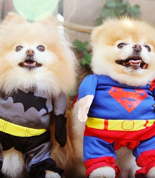 Cute Dog Costumes Pomeranian