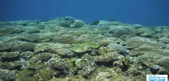ビーチクリーン海2