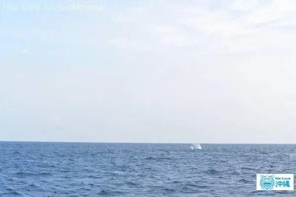 whalewatching-buro