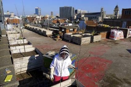0AM-beekeeping.jpg