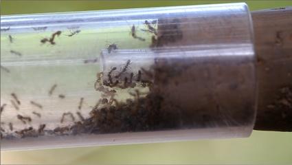 0aCollecting ants.png.0x675.0csdleioaepcik9jrj41coprleah5mi.jpg