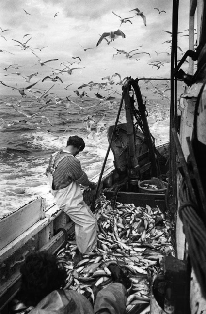 Fishing IndustryNick Hedges1981.jpg
