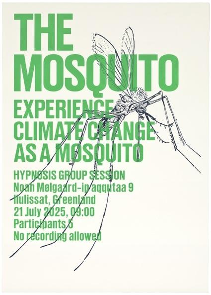 _experience_mosquito_web.jpg
