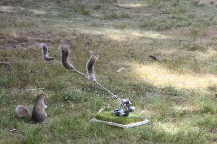 0danger-squirrel-nutkin-ian-ingram-01