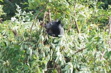 Black-bear-Shenandoah-National-Park