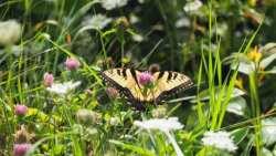 Butterflies in Shenandoah