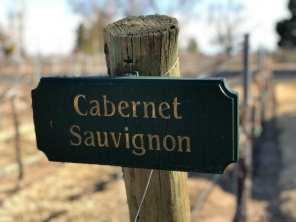 Zin Valle vineyard