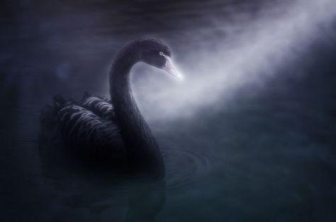 swan-4107442__480